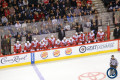 Red Wings bench (Nov 20, 2014)