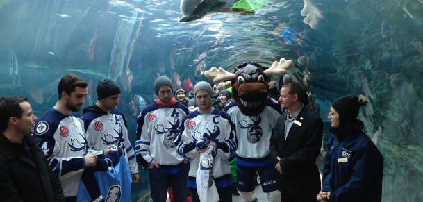 Moose visit Zoo 3